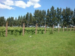 Farm Uruguay07